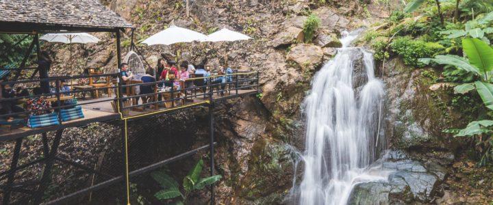 Jungle de Cafe' Pong Yang Jungle Coaster