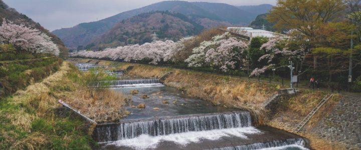 Japan Day II: Chureito Pagoda & Hakone